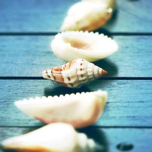 貝殻集めの写真素材 [FYI00411552]