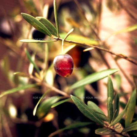 木の実の素材 [FYI00411567]