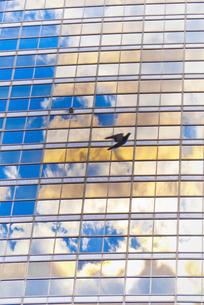 都会の鳩のシルエットの写真素材 [FYI00411581]