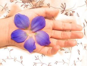 手のひらの上の青い花びらの素材 [FYI00411600]