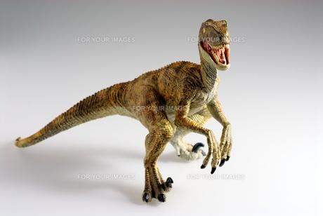 ティラノサウルスの写真素材 [FYI00411669]