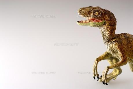 ティラノサウルスの写真素材 [FYI00411673]