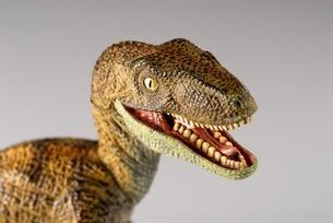 ティラノサウルスの写真素材 [FYI00411676]