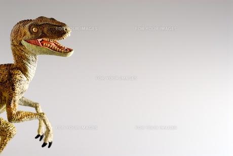 ティラノサウルスの写真素材 [FYI00411680]