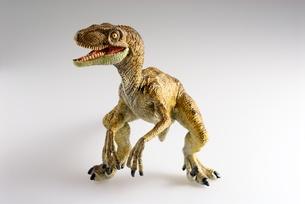 ティラノサウルスの写真素材 [FYI00411687]