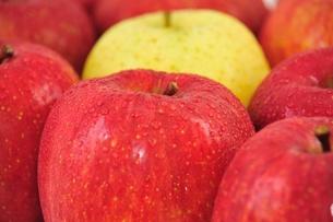 りんごの写真素材 [FYI00411898]