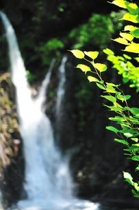 夏草と裏見の滝の写真素材 [FYI00411980]