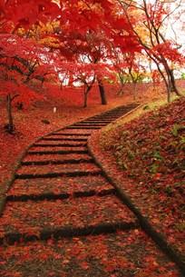 弘前公園の紅葉の写真素材 [FYI00411985]