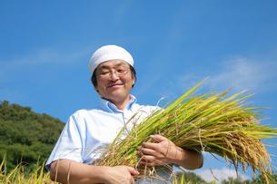 農業 豊作 喜ぶ 稲 抱える 日本人の写真素材 [FYI00412131]