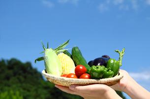 フレッシュ野菜と青空コピースペースの写真の写真素材 [FYI00412171]