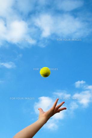 テニス サーブトスをする女性の手の写真の写真素材 [FYI00412184]