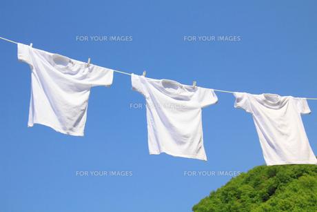 青空と新緑と白い洗濯物の写真の素材 [FYI00412210]