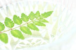 水に浮かぶ木の芽の写真の素材 [FYI00412250]