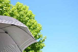 晴天の日差しと日傘 灰色の写真の写真素材 [FYI00412322]