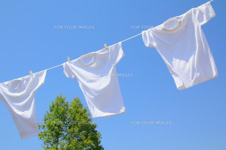 青空と新緑と風に揺れる白い洗濯物の写真の素材 [FYI00412338]