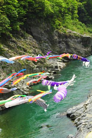 渓流に泳ぐ鯉のぼりの写真の素材 [FYI00412357]