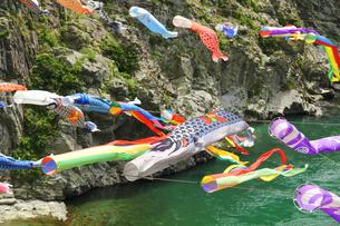 渓流に泳ぐ鯉のぼりの写真の写真素材 [FYI00412358]