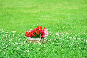 公園の芝生と花籠のとバラの花束の写真の素材 [FYI00412502]