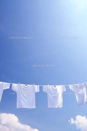 白い洗濯物 青空に干したTシャツの写真の素材 [FYI00412511]