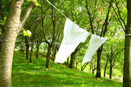 森の木に干す洗濯物 Tシャツの写真の写真素材 [FYI00412513]