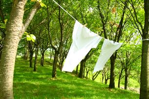 森の木に干す洗濯物 Tシャツの写真の素材 [FYI00412513]