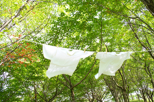 森林の日ざしに干す洗濯物Tシャツの写真の素材 [FYI00412518]