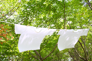 森林の木漏れ日とTシャツの写真の素材 [FYI00412520]