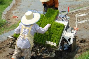 田植え機に苗を補充する農作業の女性の写真の素材 [FYI00412539]
