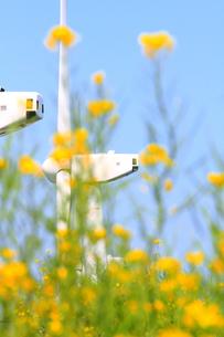 菜の花と風力発電機のアップの写真の素材 [FYI00412556]