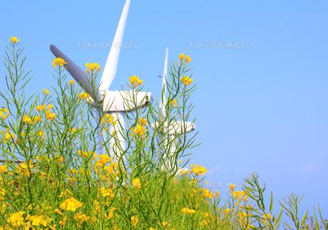 菜の花畑と風力発電機2基のズームアップの写真の素材 [FYI00412561]