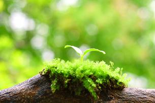 倒木に苔と再生する森とエコのイメージの写真の素材 [FYI00412571]