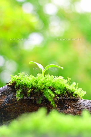 倒木に苔と再生する森とエコのイメージの写真の素材 [FYI00412573]