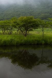 水面に映る湖畔の木々の写真素材 [FYI00412660]