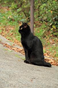 坂の途中の黒猫の写真素材 [FYI00412789]