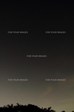 樹形と星空の写真素材 [FYI00412791]