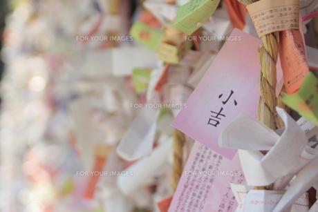 おみくじの写真素材 [FYI00412808]