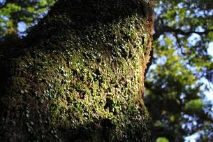 小さな緑葉の写真素材 [FYI00412839]