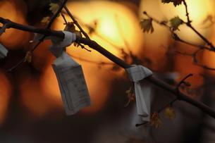 おみくじと夕日の点光源の写真素材 [FYI00412914]