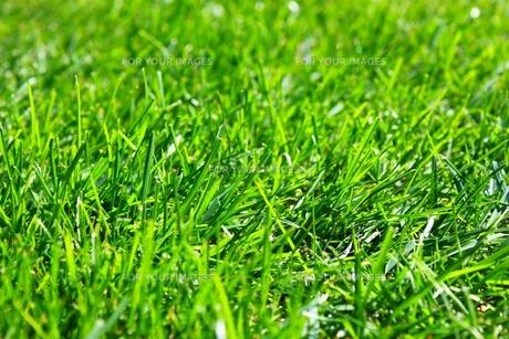 芝の写真素材 [FYI00412934]