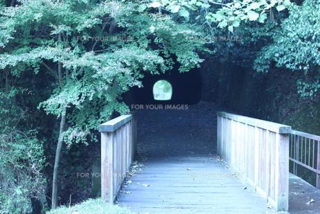 翠とトンネルの写真素材 [FYI00413005]