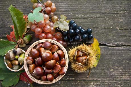 秋の収穫の素材 [FYI00413082]