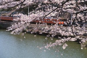 桜と中央線の写真素材 [FYI00413304]