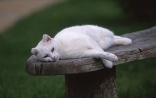 ネコの昼寝の写真素材 [FYI00413333]