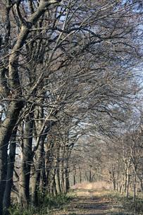 冬の晴れ間の写真素材 [FYI00413717]