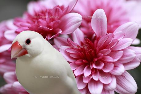 花を背負ったイケブンの写真素材 [FYI00413817]