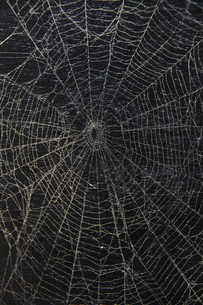 クモの巣の写真素材 [FYI00413822]