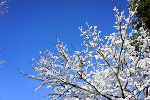 春待ちⅡの写真素材 [FYI00413845]