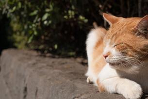 野良猫の日向ぼっこの写真素材 [FYI00414171]