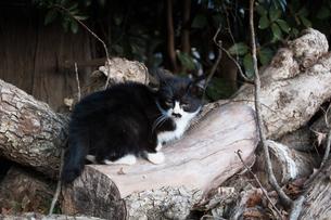 丸太の上の仔猫の写真素材 [FYI00414185]