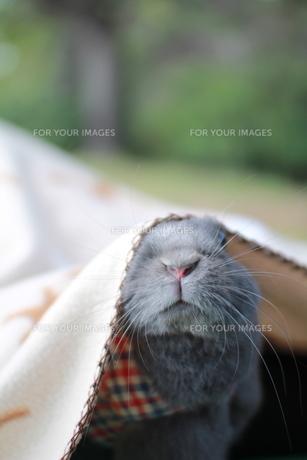 ウサギの素材 [FYI00414261]
